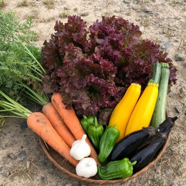 季節の採れたて野菜 7月中旬ごろ入荷予定