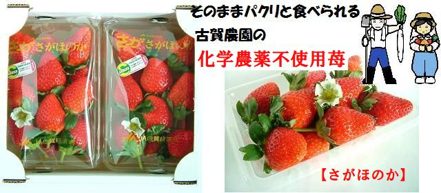ジュワっと広がる輝く甘み古賀農園化学農薬不使用苺 さがほのか 2パック入【無添加食品・自然食品】