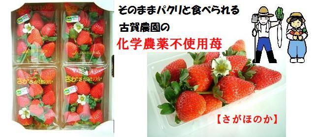 ジュワっと広がる輝く甘み古賀農園化学農薬不使用苺 さがほのか 4パック入【無添加食品・自然食品】