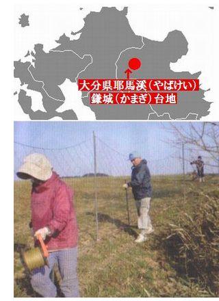 国産(大分県産)無農薬栽培小麦100% 耶馬渓そうめんの産地鎌儀台地