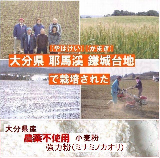 下郷農協 大分県産 無農薬栽培 小麦(ミナミノカオリ) 強力粉