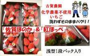 2種類の味が楽しめる古賀農園化学農薬不使用苺「佐賀ほのか」、「紅ほっぺ」セット【無添加食品・自然食品】