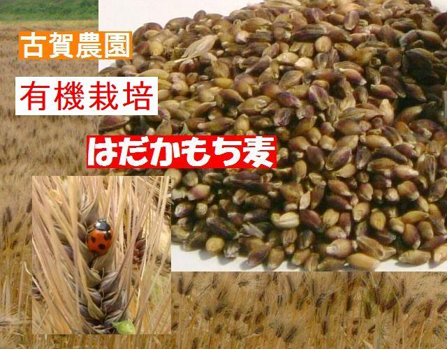 ご飯が美味しくなるモッチリ食感収穫 古賀農園佐賀県産有機もち麦(玄麦)500g【無添加食品・自然食品】