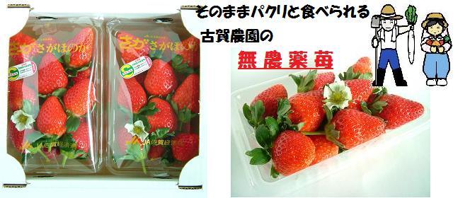 古賀農園の無農薬苺 さがほのか2パック入り