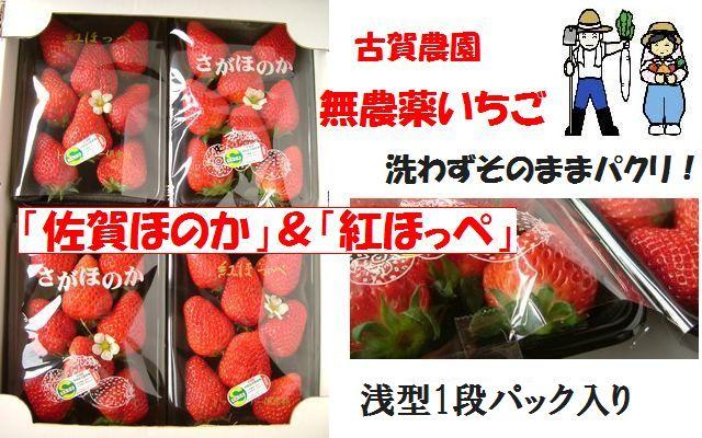 古賀農園 無農薬栽培イチゴ バランスのとれた酸味と甘みの「佐賀ほのか」&濃い甘酸っぱさの「紅ほっぺ」2種類の味が楽しめます!