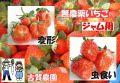 古賀農園 無農薬栽培いちご ジャム用(変形苺、虫食い苺等) 4パック入1kg以上