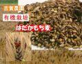ご飯が美味しくなるモッチリ食感  古賀農園 (佐賀県)有機もち麦(玄麦)1kg【無添加食品・自然食品】