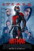 【映画ポスター】 アントマン グッズ (ポールラッド/Ant-Man) /両面 オリジナルポスター