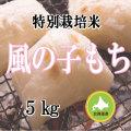 減農薬栽培 もち米5kg