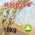 減農薬栽培きたくりん10kg