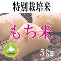 【北海道産】減農薬栽培 もち米5kg 令和2年産米