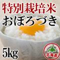 【北海道産】減農薬栽培 おぼろづき5kg 令和元年産米