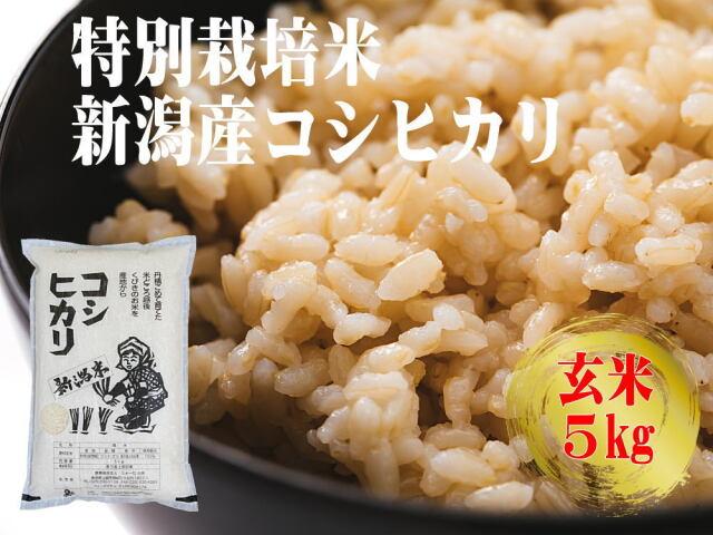 特別栽培米 新潟産コシヒカリ 玄米 5kgの販売