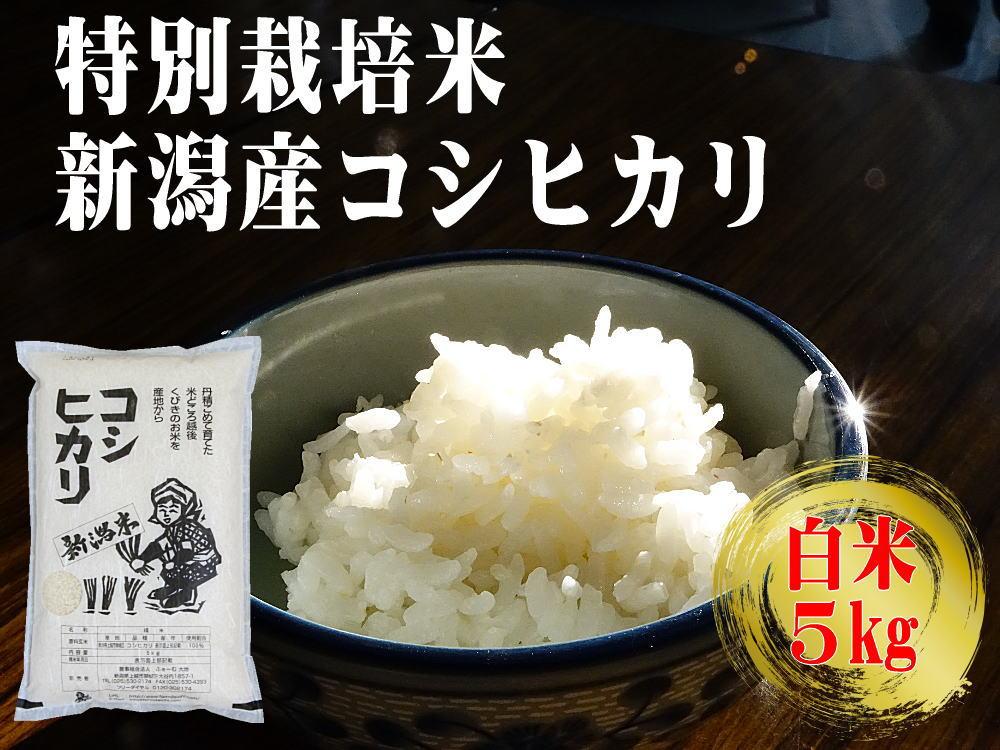 特別栽培米 新潟産コシヒカリ 白米 5kgの販売