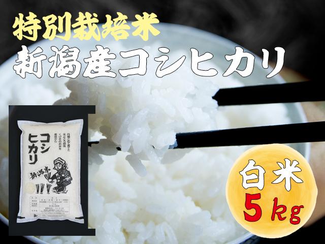 特別栽培米 新潟産コシヒカリ 無洗米 5kgの販売