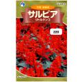 ウタネ 花の種/種子 サルビア リトルタンゴ 種 (レターパックライト発送 全国一律370円)30876