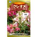 ウタネ 花の種/種子 クレオメ カラーフォンテン混合 種 (レターパックライト発送 全国一律370円)90046