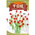 ウタネ 花の種/種子 千日紅 ストロベリーフィールド 種 (レターパックライト発送 全国一律370円)12448