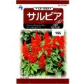ウタネ 花の種/種子 サルビア 種 (レターパックライト発送 全国一律370円)31948