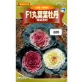 ウタネ 花の種/種子 ぼたん 牡丹 F1丸葉葉牡丹 特選混合 種 (レターパックライト発送 全国一律370円)90032