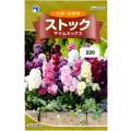 ウタネ 花の種/種子 ストック マイムミックス 種 (レターパックライト発送 全国一律370円)90035