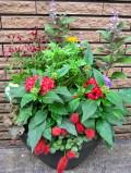 秋の寄せ植え1
