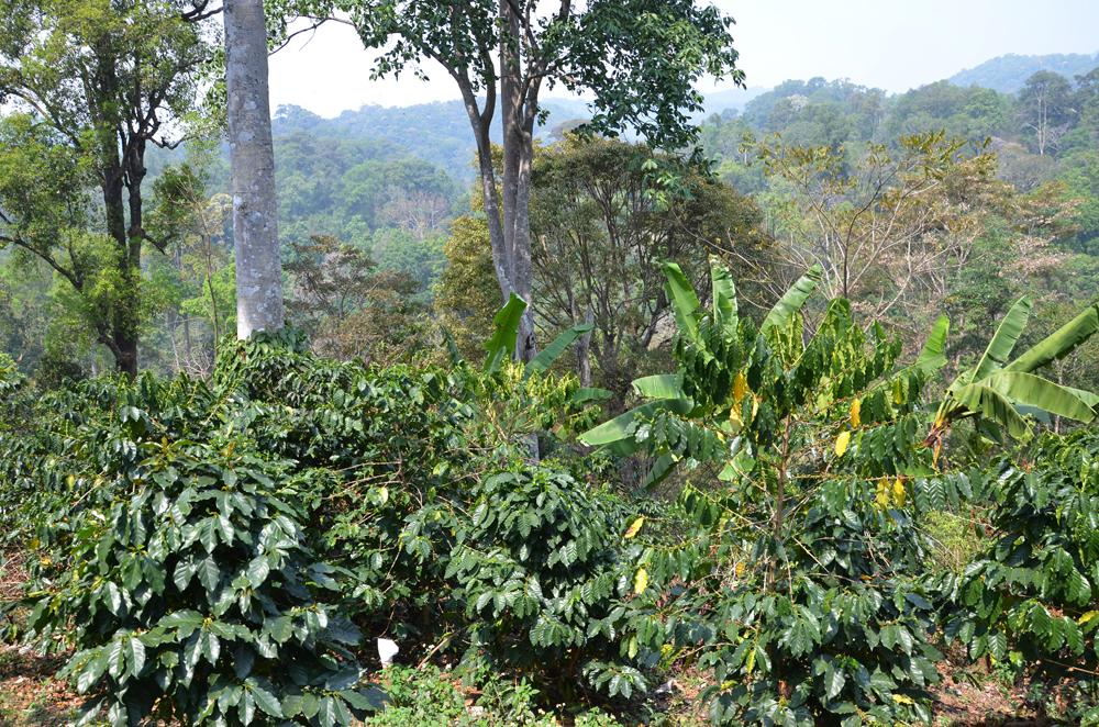 ジャングルの様子
