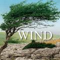 著作権フリー効果音素材ウインズ・風&嵐効果音ライブラリ・24bit96KHz