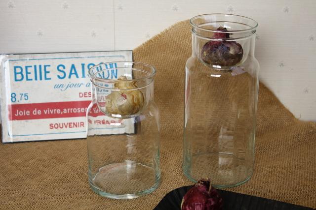 リユーズガラス バルブボトル 水栽培