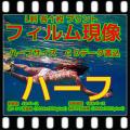 ハーフフィルム現像+L版各1枚プリント+Wインデックス+CD書込(高解像度16B)