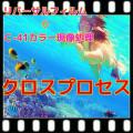 クロスプロセスフィルム現像+Wインデックス+CD書込(画像の荒い解像度4B)35/120共通