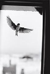 ベルナール・プロス写真集: BERNARD PLOSSU: HIRONDELLES ANDALOUSES