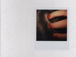 ベント・アルネ・ファルク写真集 : BENGT-ARNE FALK : POLAROID SX-70