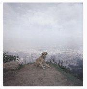 【古本】アレック・ソス写真集: ALEC SOTH: DOG DAYS BOGOTA 【サイン入】