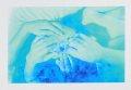 【古本】荒木経惟写真集: 青ノ時代/去年ノ夏:アラキネマ: NOBUYOSHI ARAKI: BLUE PERIOD / LAST SUMMER: ARAKINEMA
