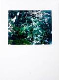 【古本】鈴木理策写真集: 意識の流れ: RISAKU SUZUKI: STREAM OF CONSCIOUSNESS