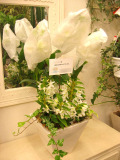 周年祝い 開業祝い 胡蝶蘭 新宿花屋フラワーショップアイビー