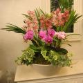 開店祝い 開業祝い 胡蝶蘭 新宿花屋フラワーショップアイビー