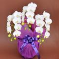 誕生日プレゼント用の花 胡蝶蘭ミディー 白色 花3本立ち