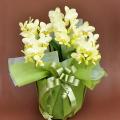 誕生日プレゼント 花 胡蝶蘭 ミディー 黄色 花3本立ち