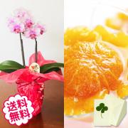 [敬老の日]テーブル胡蝶蘭2本立&銀座千疋屋 銀座まるごとみかんぜりぃ
