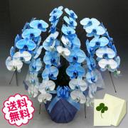 青い胡蝶蘭 大輪 5本立 45輪以上(つぼみ含む)