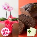 [敬老の日]テーブル胡蝶蘭2本立&烏骨鶏パウンドケーキ金箔ショコラ