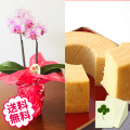 [敬老の日]テーブル胡蝶蘭2本立&烏骨鶏極バウムクーヘン