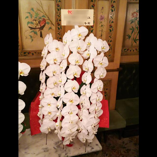 胡蝶蘭 白3本立 ロング