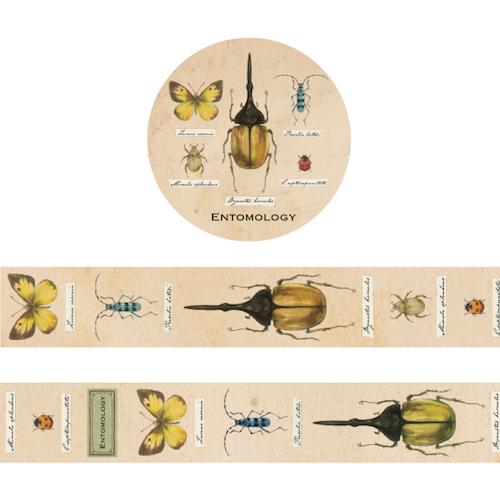 STUDY HOLIC マスキングテープ 昆虫学(ST-064)【ネコポスOK】
