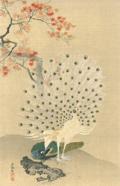 円山応挙 孔雀図 日本木版画粋