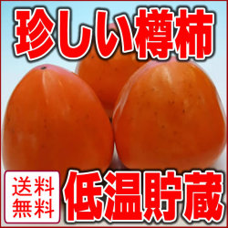 宮城県産樽柿