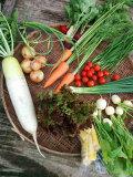 【フルーツを超えるリピート率】熊本から安心・新鮮野菜を宅配●栽培中は農薬不使用の野菜が中心の野菜セット