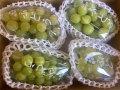 みんな大好き「緑の葡萄●シャインマスカット、瀬戸ジャイアンツ」(自然派 中箱)